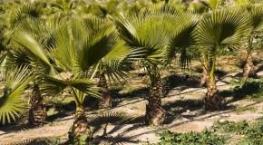 Guerre économique entre l'Afrique et l'Europe : l'exemple de l'huile de palme