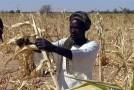 Comment améliorer la sécurité alimentaire en Afrique ?