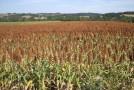 Ecoagris : l'information agricole au service de la sécurité alimentaire