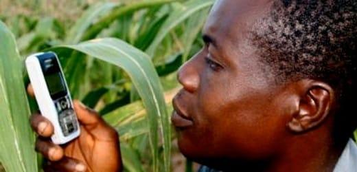 Information mobile et récoltes au Ghana