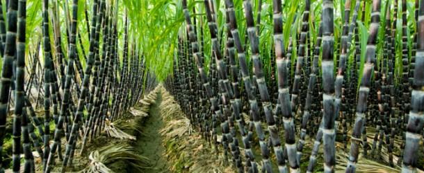 SOMDIAA investit dans l'agriculture en Afrique