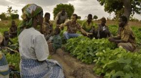 Malawi : Développer la culture du soja, combattre la malnutrition