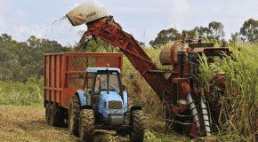 SOSUCAM : la modernisation en marche de l'agriculture camerounaise