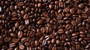 Au Kenya, Vava Coffee brise les codes de la production de café