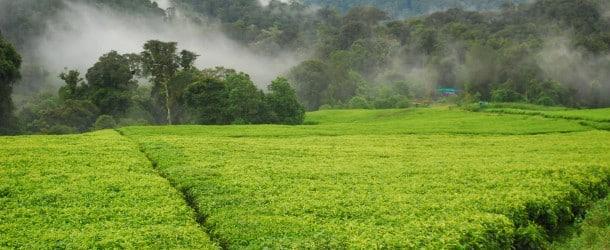 L'avenir de l'Afrique réside-t-il dans l'économie verte ?
