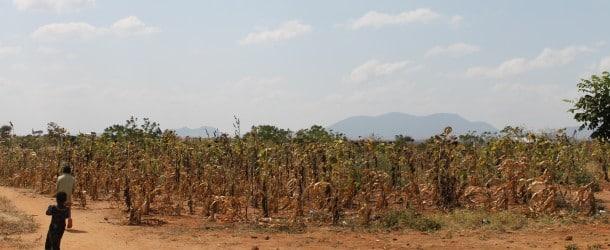 L'assurance agricole gagne du terrain