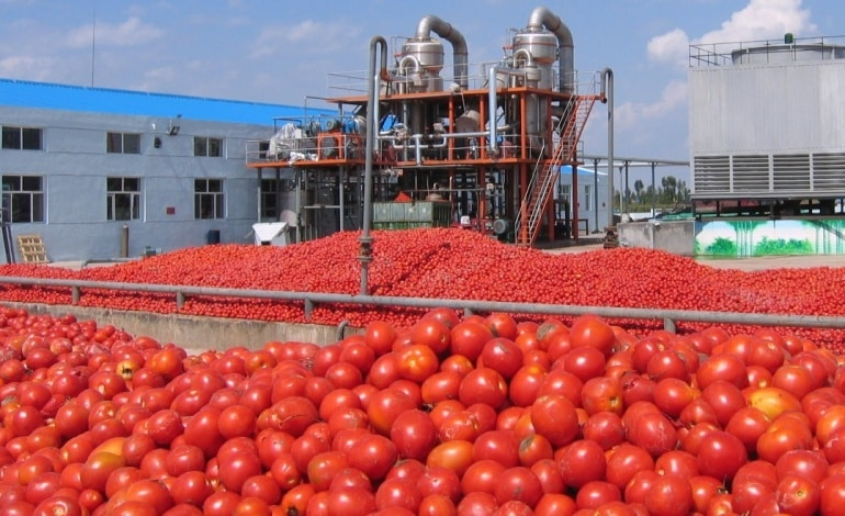 dangote nigeria tomate