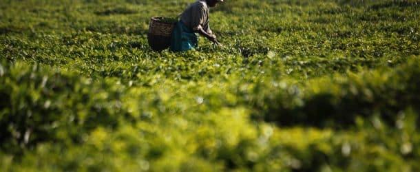 Révolution verte : l'agriculture comme pilier du développement