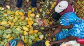 Le Ghana mise sur la transformation locale du cacao