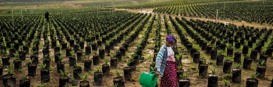 Le nouvel  élan de l'agribusiness en Afrique